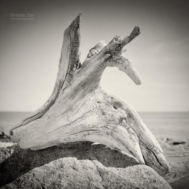 Analog Photography: Driftwood (Tadoussac, Quebec)