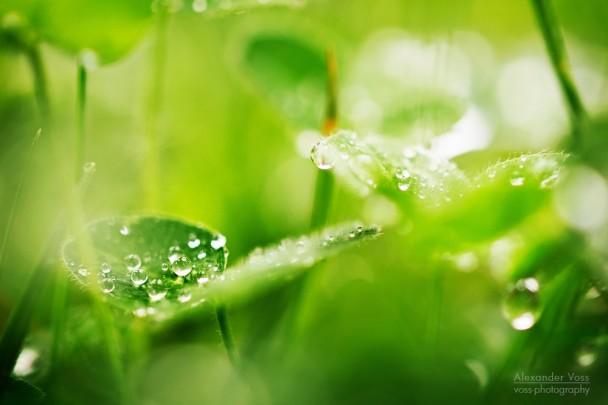 Makrofotografie: Wassertropfen im Gras