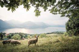 Monte Isola – Iseosee (Italien)