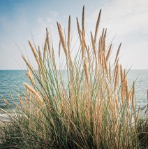 Sylt – Beach Grass and the North Sea
