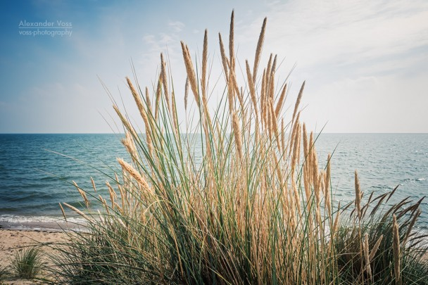 Sylt - Strand und Dünengras