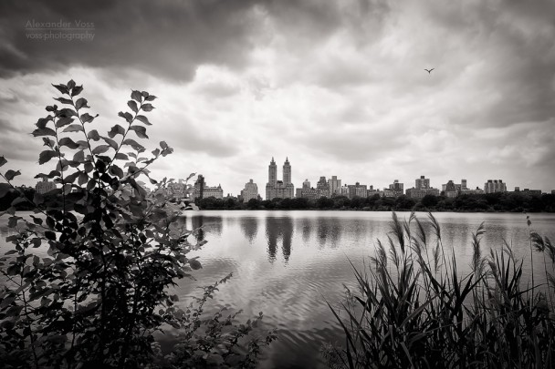 Black and White Photography: New York - Central Park