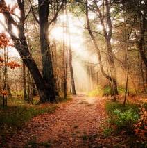 Herbstwald auf Rügen