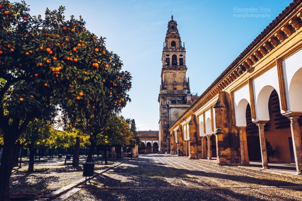 Córdoba - Mezquita / Patio de los Naranjos
