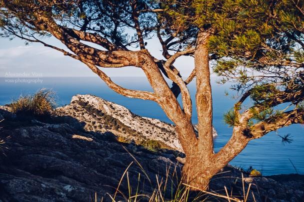 Mallorca - La Victòria