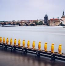 Prag – Gelbe Pinguine / Museum Kampa