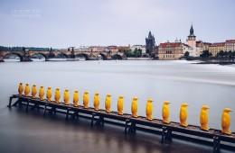 Prague – Yellow Penguins / Museum Kampa