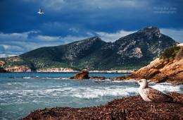 Mallorca – Sa Dragonera