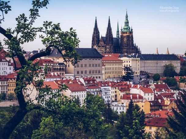 Prager Burg / Veitsdom